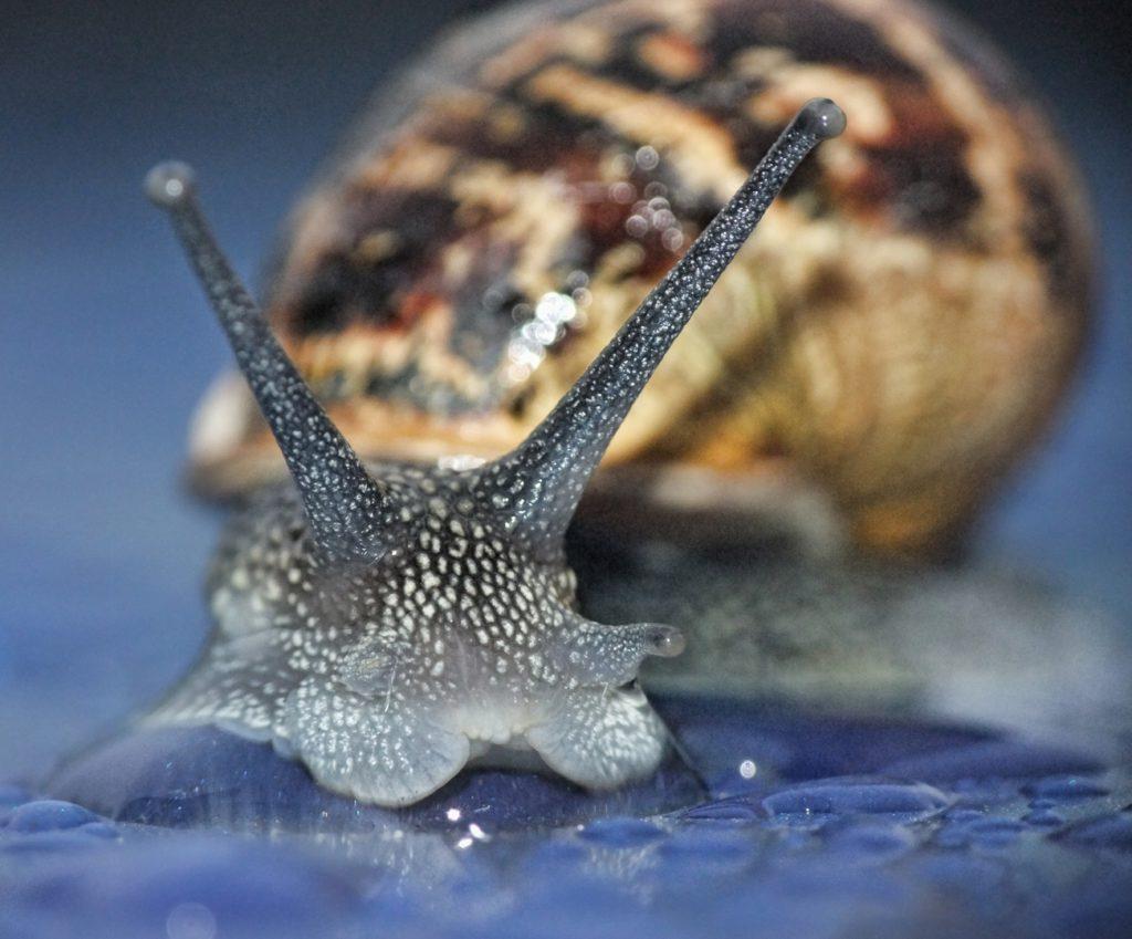 nature snail