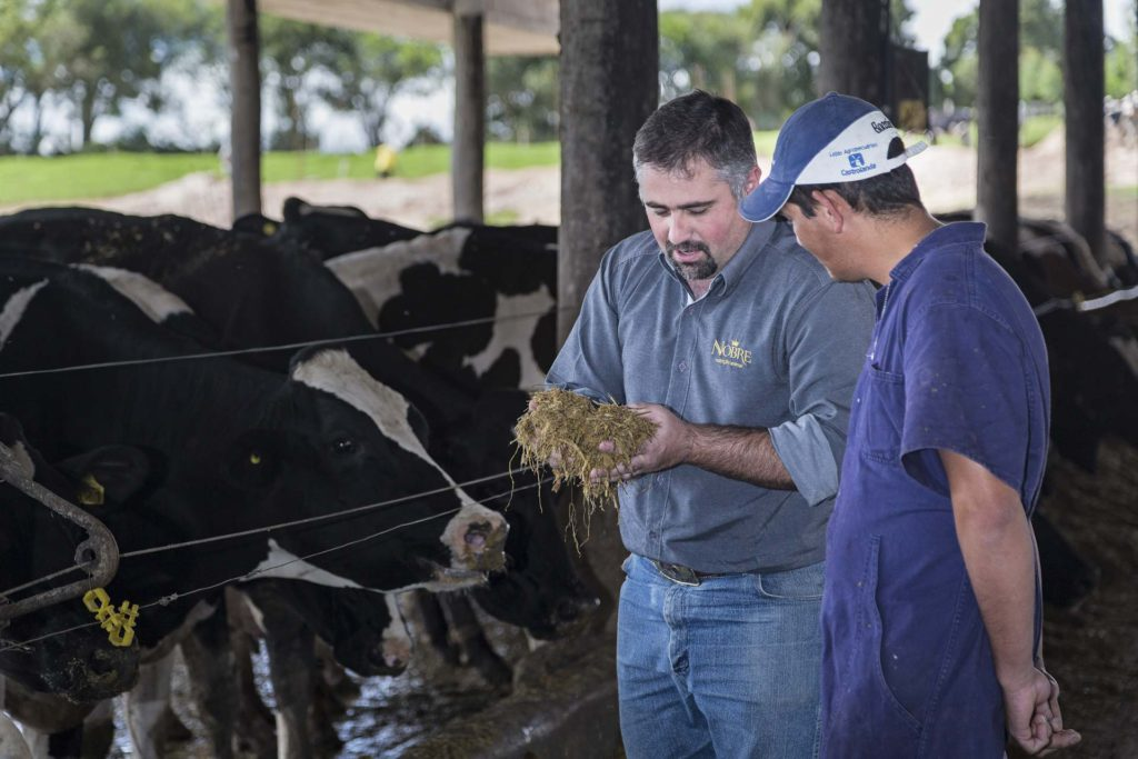 feeding cows in a farm